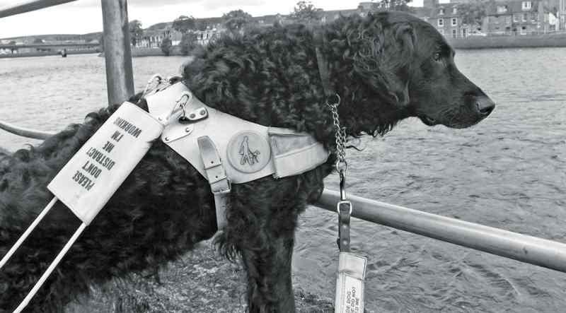 Pets At Home Offer £1000 Reward To Help Find Guide Dog